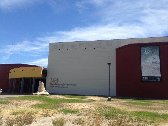Museo Paleontologico Egidio Feruglio: Museo