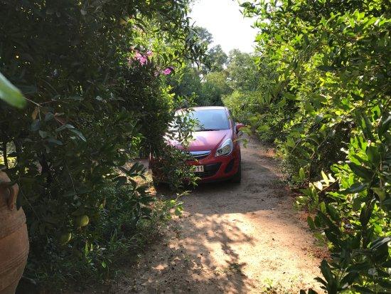 Metohi Kindelis : car park in the fig grove