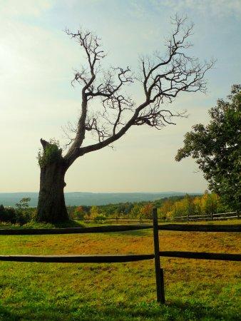Esperance, État de New York : Oak tree in the sunlight