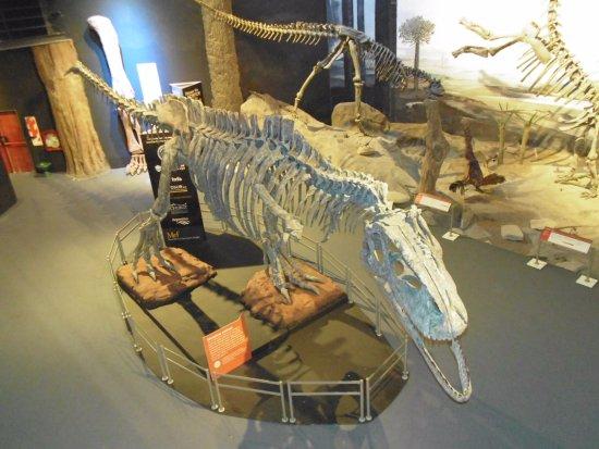 Museo Paleontologico Egidio Feruglio: Maravilloso!!