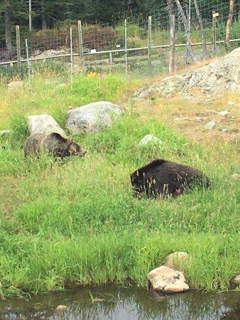 Норт-Ванкувер, Канада: Orphaned Grizzlies