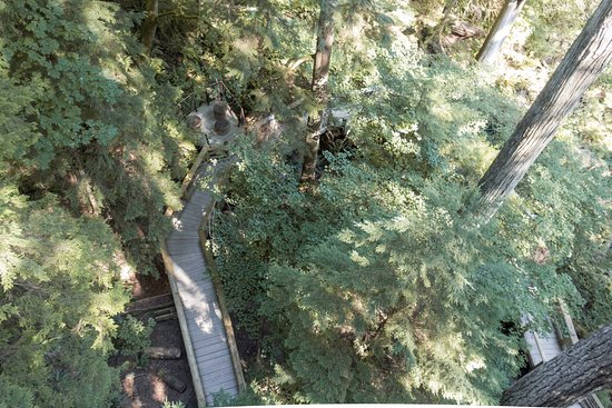 North Vancouver, Canadá: Treetop Views