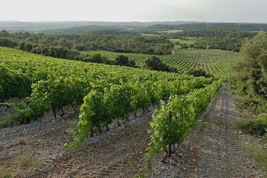 Saint-Jean-de-Cuculles, France: Vignes