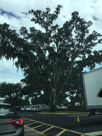 Bushnell, Φλόριντα: McDonald's