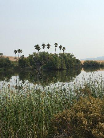 di Rosa: a view of the lake