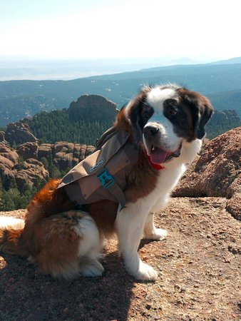 Sedalia, CO: Here's my little girl by lookout on top of Devils Head.