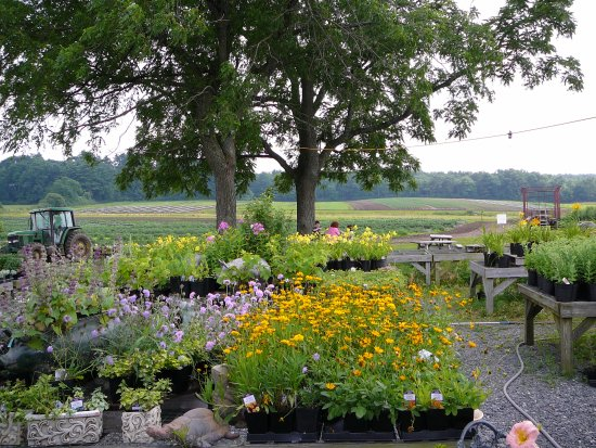 Tangerini's Spring Street Farm