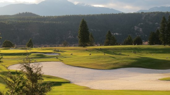 Radium Hot Springs, Canada: Fairways 7, 5, 3 overlooking the Columbia and the Purcell Mountains and friendly Bighorn sheep