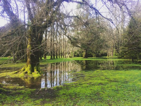 Jardin Botanico de la Universidad Austral de Chile Aufnahme