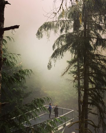 Campbell River, Canadá: Misty mornings at the Elk Falls Suspension Bridge lookout