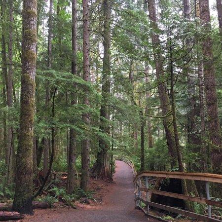 Campbell River, Καναδάς: Elk Falls Provincial Park trails