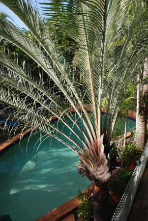The Palms At Palm Cove: Wonderful Palms