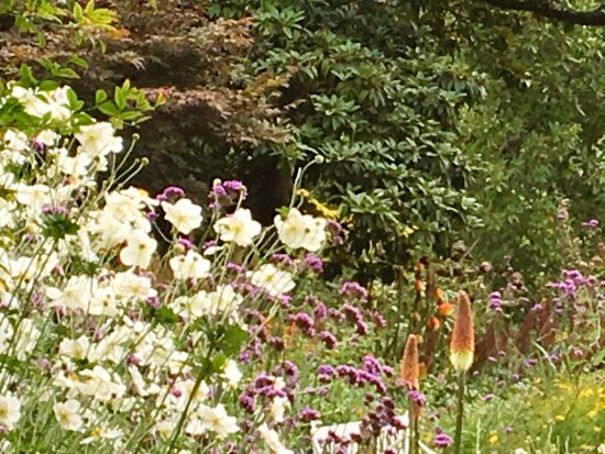 St Austell, UK: Perennial border