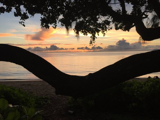The Palms At Palm Cove: Pretty special place - Palm Cove Sunrise