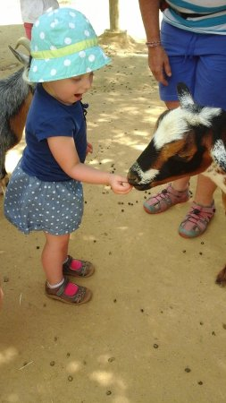 Happy Hollow Park and Zoo: petting zoo