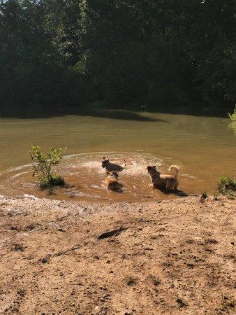 Rutherfordton, Carolina del Norte: Swimming hole fun