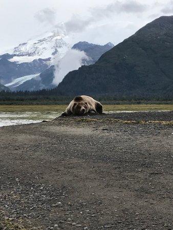 Alaska Bear Adventures Photo