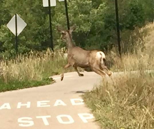 Rio Grande Trail: This guy was across the street then joined me on the trail
