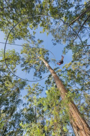 Wyong Creek, Australia: TreeTop Crazy Rider