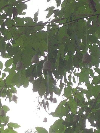 Minokamo, Japonia: 鳥の声が常に自然に聞こえてくる場所です。