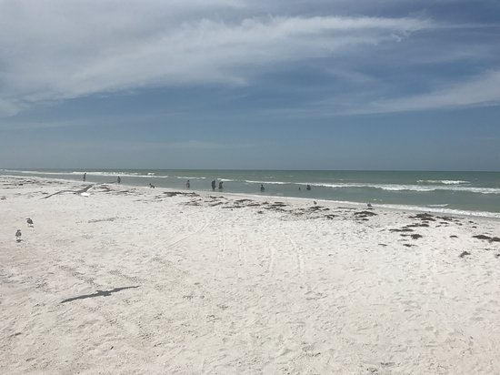 Honeymoon Island State Park Foto