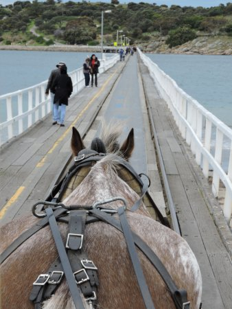Victor Harbor, Australia: looking our from the carriage on the way over to the Island