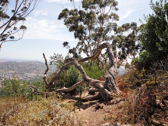 Ла-Меса, Калифорния: Cool tree limbs