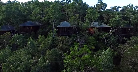 Thala Beach Nature Reserve: Treetop accommodation with views to the Coral Sea.