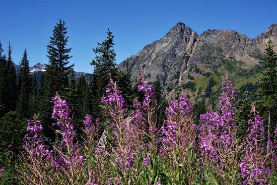 Blue Lake trail : Wildflowers and Cascade peaks on Blue Lake hike