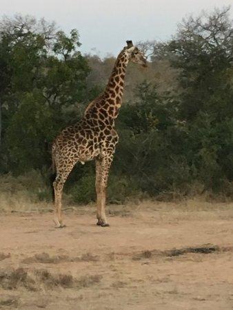 Balule Nature Reserve, Güney Afrika: photo4.jpg
