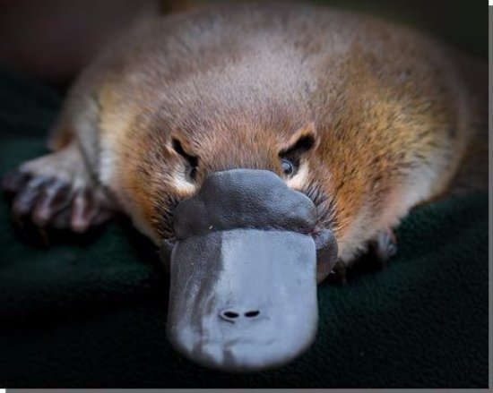 Strahan Holiday Retreat: Platypus - Onsite