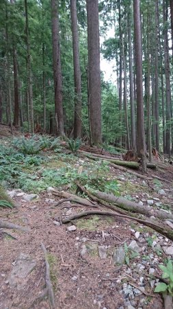 Nord-Vancouver, Canada: Path to the top