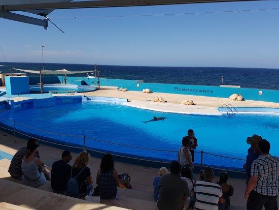 Naxxar, Malta: 20170903_163048_large.jpg