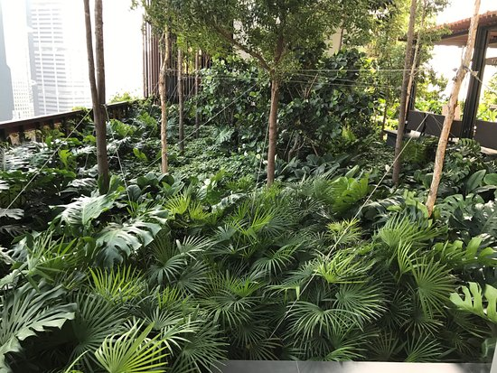 The Small Garden At Front Desk Level Picture Of Oasia Hotel