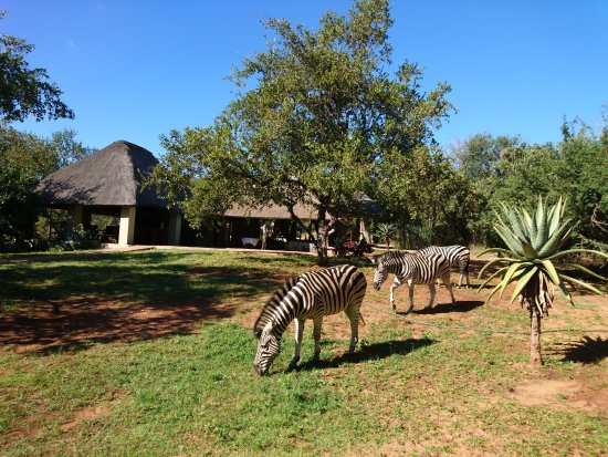Marloth Park Picture