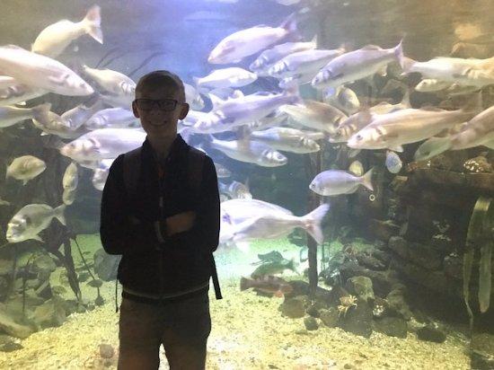 Brynsiencyn, UK: The big fish tank