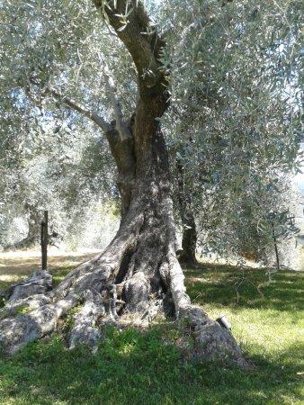 Camporosso ภาพถ่าย