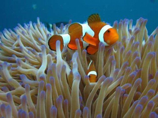 Banyuwedang, Indonesia: Snorkeling trip to menjangan island
