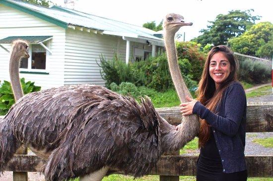 Waitomo Big Bird Bed & Breakfast照片
