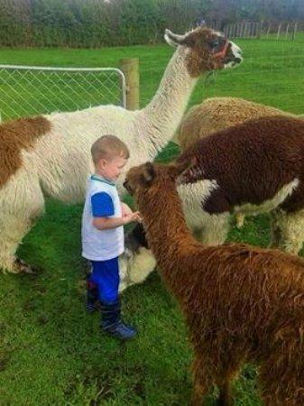 Otorohanga, Nowa Zelandia: Mini-Alpaca & Llama Land!