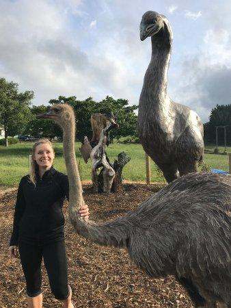 Otorohanga, Nowa Zelandia: Big Birds at the Big Bird - Giant Moa and Ostrich