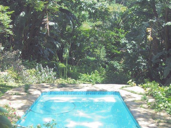 Margate, South Africa: Our swimming pool in our tropical garden.