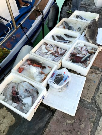 Fish at the waterfront in zakinthos town anagenessis for 94 1 the fish