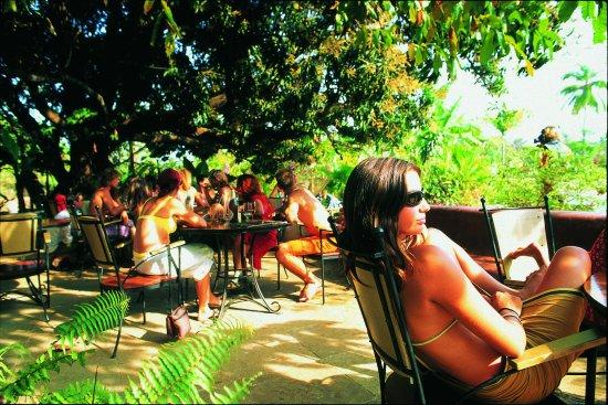 Anjuna, India: Chilling under the 100 year old mango tree!