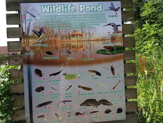 Tropical Butterfly House, Wildlife & Falconry Centre: Pond Life