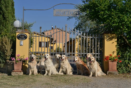 Acquaviva di Montepulciano, İtalya: Metina dog-welcome