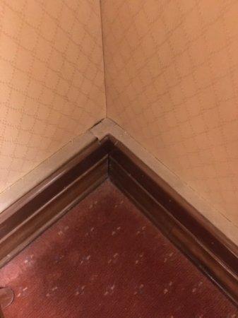 هوتل أوشنيا: The room was filthy. Layers of dust and dust bunnies.
