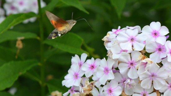 Ille-et-Vilaine, France: Les Jardins de la Pérouse du Mitan : un sanctuaire pour les papillons