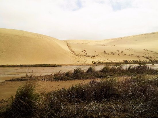 Kaitaia, New Zealand: Sand dunes to slide down.