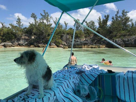 Hamilton, Bermuda: Benny lifeguarding!